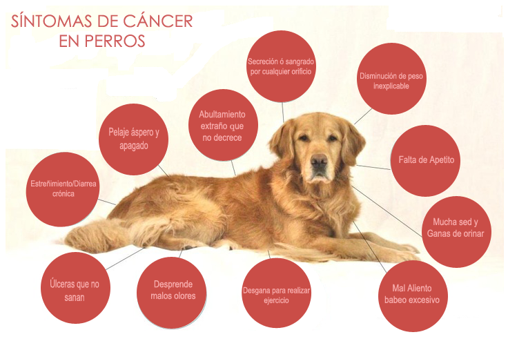 cancer perros infografía copia - Symptoms of cancer in dogs