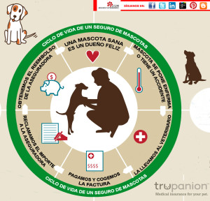 ¿Qué son los seguros veterinarios?