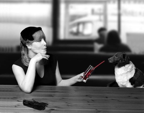 Perro bebiendo, Seguros Veterinarios, Seguro para perros