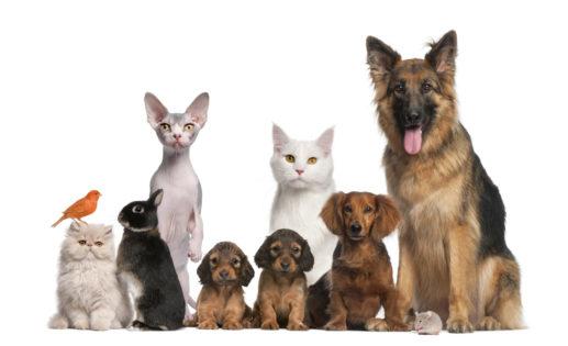 Mascotas, perros y gatos, Seguros Veterinarios, seguro para perros
