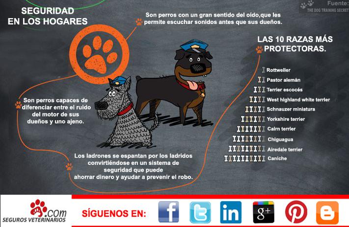 Owning a Dog, Seguros Veterinarios, seguros para perros