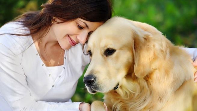 Perro dueño - Beneficios de la Esterilización de las mascotas. Para el Propietario. Parte 2