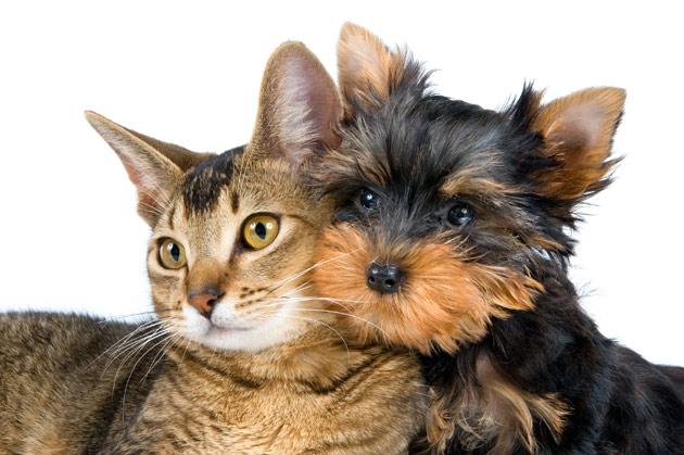 perro gato, Seguros Veterinarios, seguros para perros