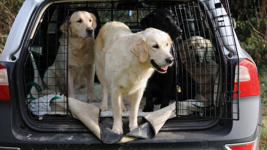perro viaje - Consejos para Viajar con tu perro