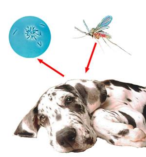 leishmania, Seguros Veterinarios, seguros para perros