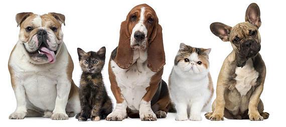 perros y gatos, Seguros Veterinarios, seguros para perros