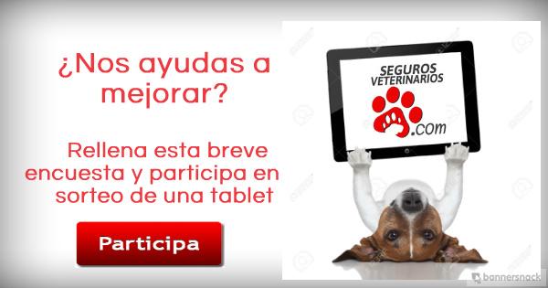 Banner encuesta1 - Encuesta sobre las Mascotas y los Seguros