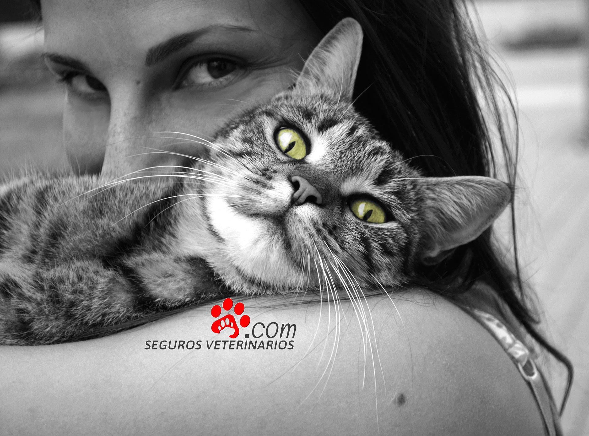 Mujer con gato, Seguros Veterinarios, seguros para perros
