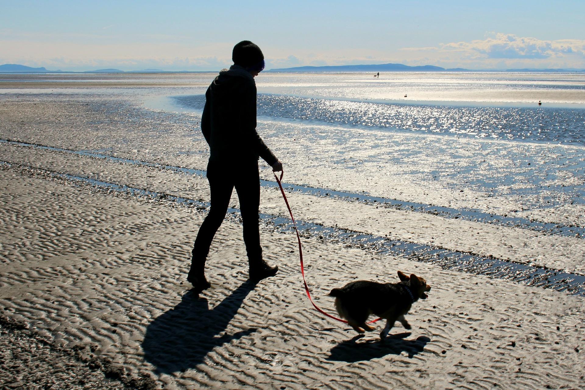 san fernando, tendra playa para mascotas, Seguros Veterinarios, seguro para perros