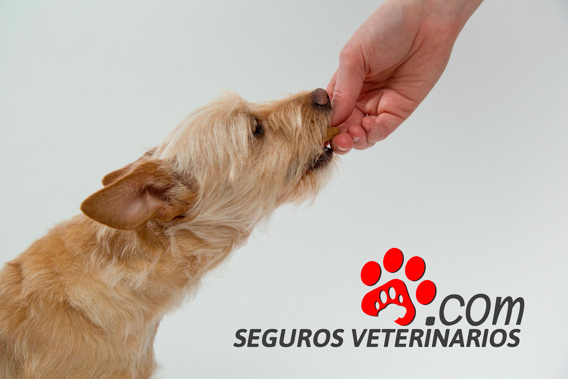 Banco de Alimentos para perros