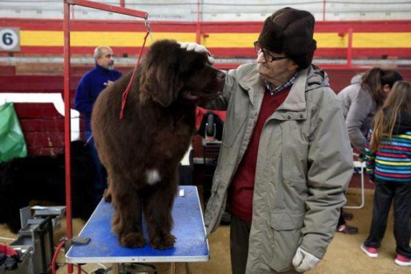 Perro con hombre, Seguros Veterinarios, seguros para perros