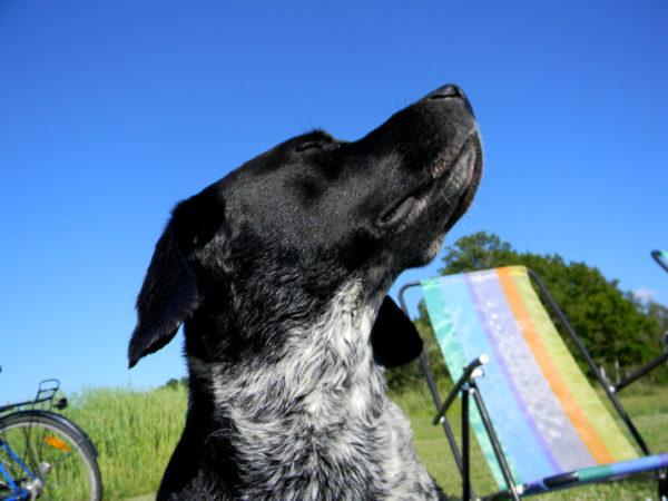Perro en verano, Seguros Veterinarios, seguros para perros