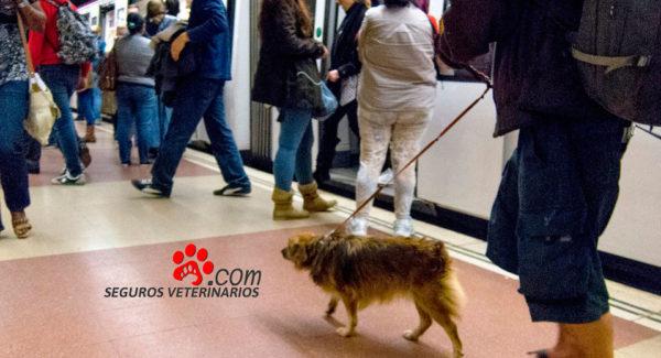 usuario-del-metro-de-madrid-lleva-su-perro