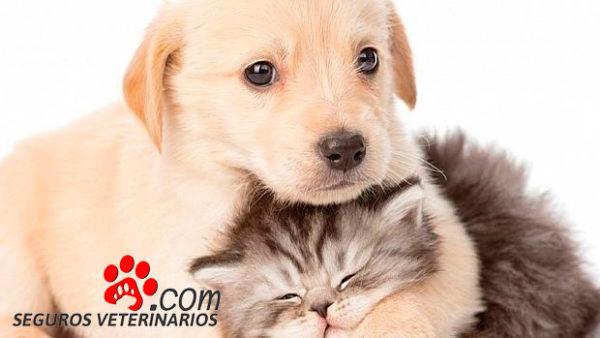 Registro mascotas Seguros Veterinarios seguros para perros