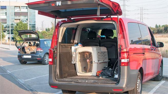 foto mascotas coche - Cómo trasportar a tu mascota cuando viajas