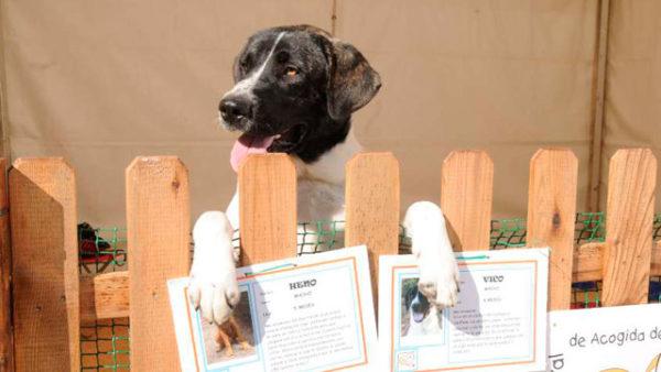 mascotas-de-acogida Seguros Veterinarios seguros para perros