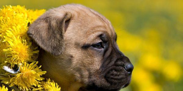 Kukur Tihar Seguros Veterinarios seguros para perros