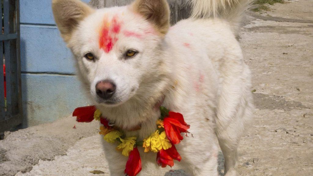 ThinkstockPhotos 486914065 1024x576 - KUKUR TIHAR y la Fiesta que celebran el amor por las mascotas