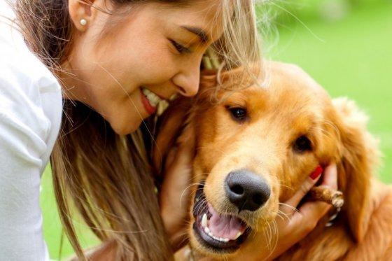 Golden retriever Seguros Veterinarios seguros para perros