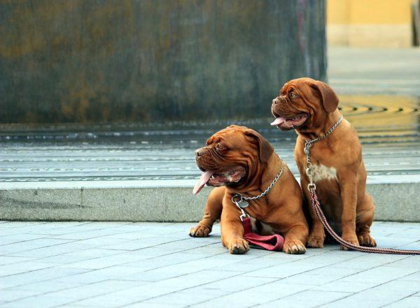 perros Seguros Veterinarios seguros para perros
