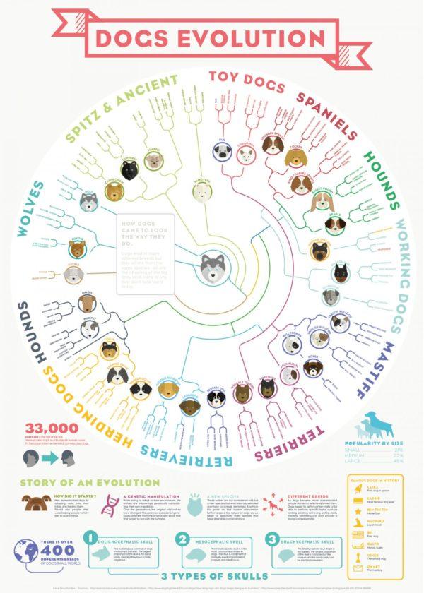 evolución de los perros Seguros Veterinarios, seguros para perros