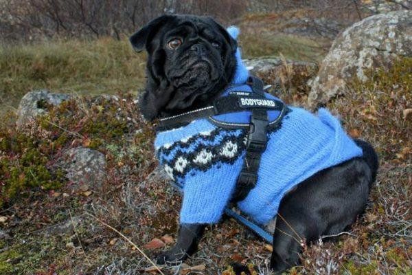 Perro con ropa, Seguros Veterinarios, seguros para perros