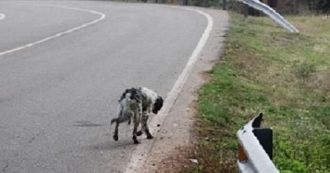 perro carretera, Seguros Veterinarios, Seguros para perros
