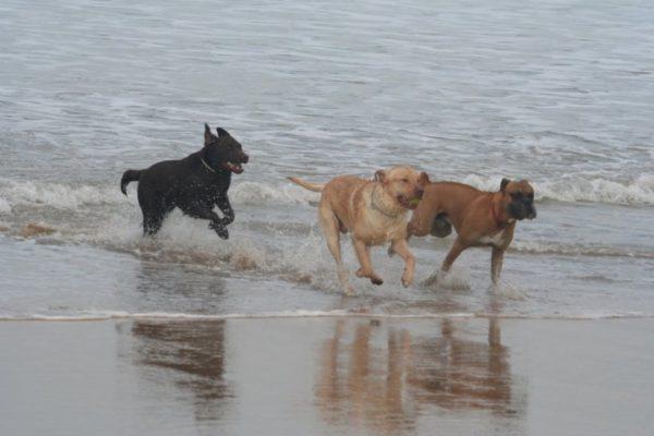 Perros en la playa, Seguros Veterinarios, seguros para perros