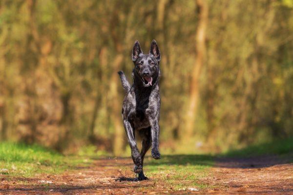 perro corriendo seguros veterinarios seguros para mascotas