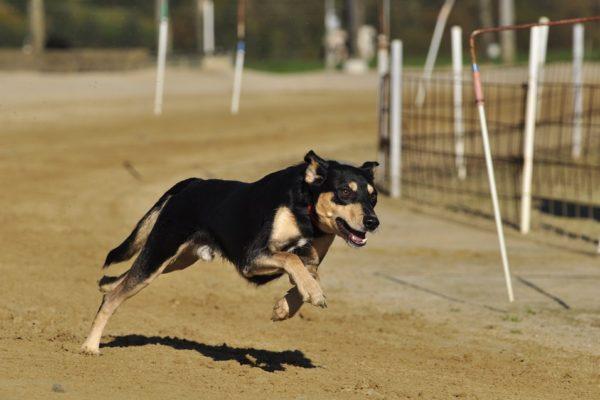 perro corriendo seguros veterinarios seguros para perros