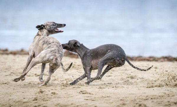 blog3 600x362 - Third Party Liability dog Insurance in Spain
