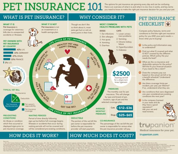 blog5 600x518 - Pet sector and pet insurance in Europe and Spain