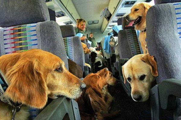 perro avion, Seguros Veterinarios, seguros para perros