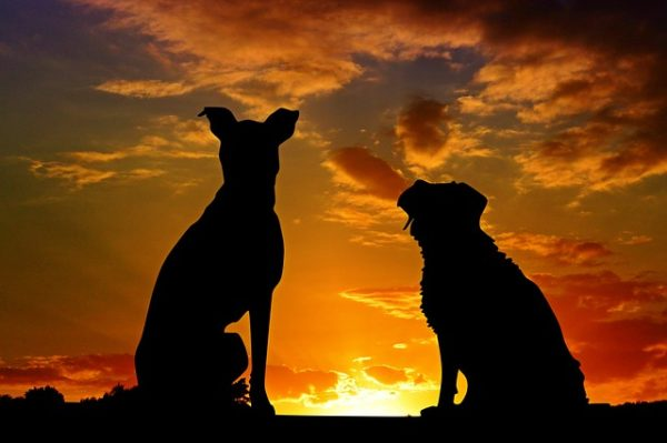 Perros atardecer, Seguros Veterinarios, seguros para perros