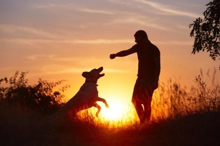 Perro atardecer, Seguros Veterinarios, seguros para perros