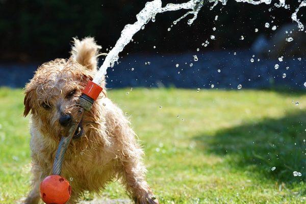 perro jugando con manguera, Seguros Veterinarios, seguro para perros