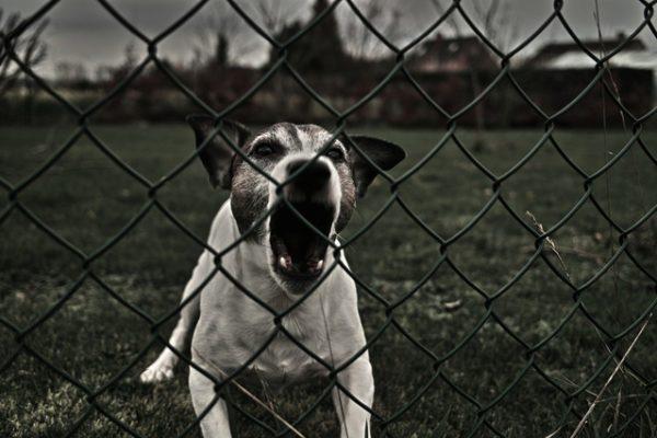 perro ladrando, Seguros Veterinarios, seguros para perros