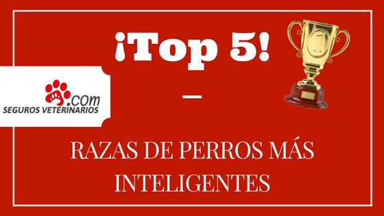 Top 5 Razas de perros más inteligentes