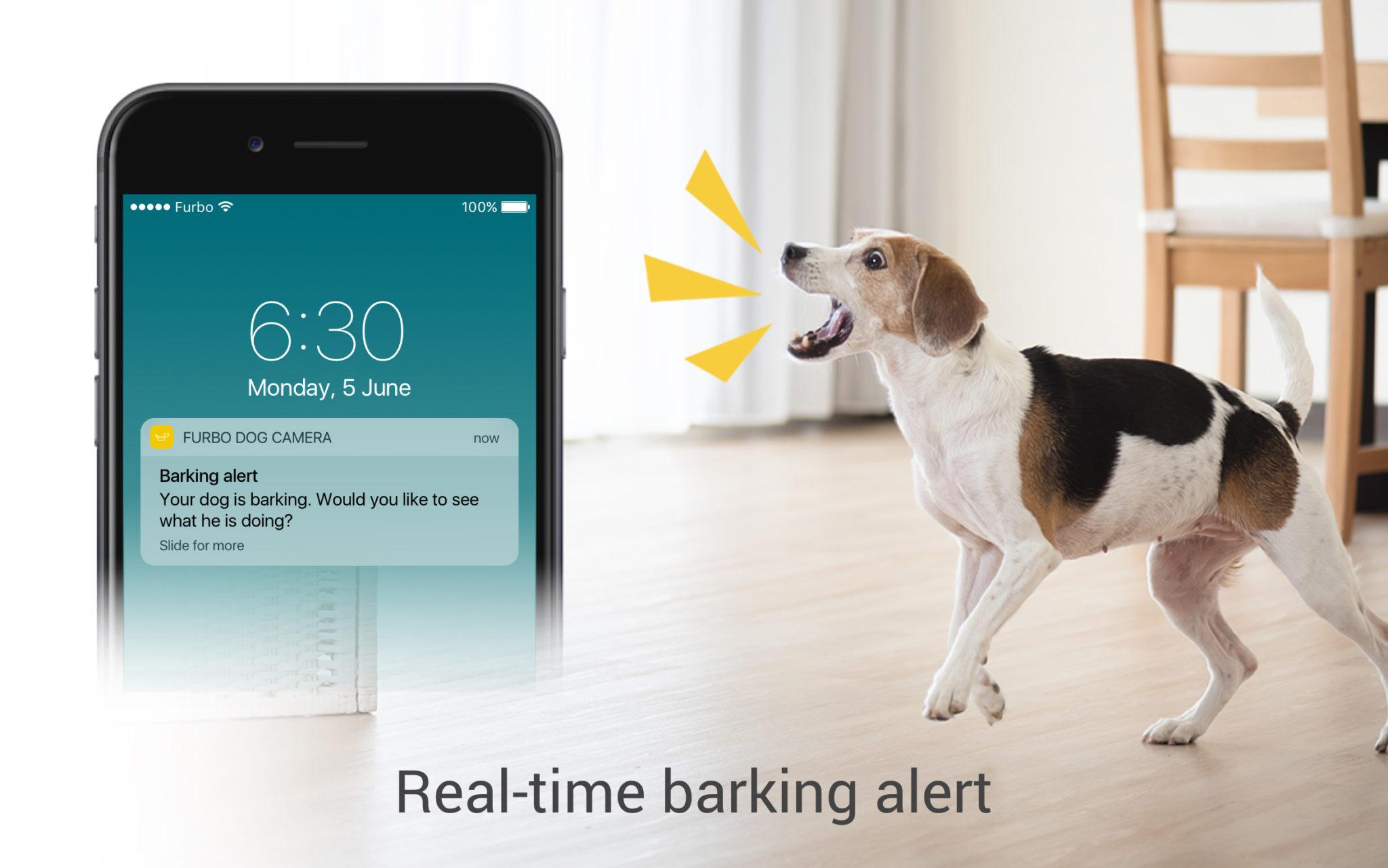 Barking Alert - FURBO, NUESTRO NUEVO MEJOR ALIADO