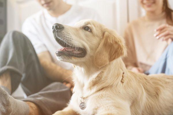 close up couple with dog indoors 600x400 - ¿Mi perro está cubierto por el seguro del hogar?