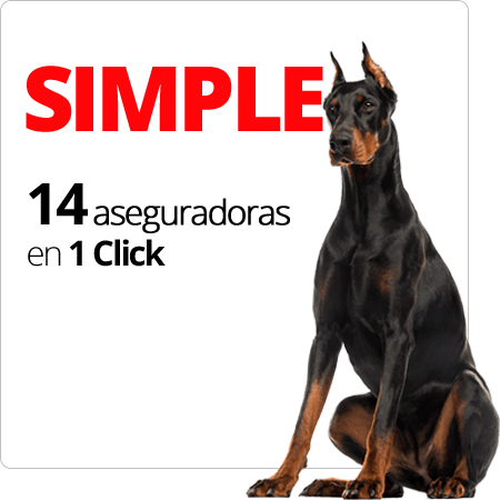 SIMPLE 14 aseguradoras en 1 Click