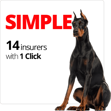 SIMPLE 14 insurers with 1 Click
